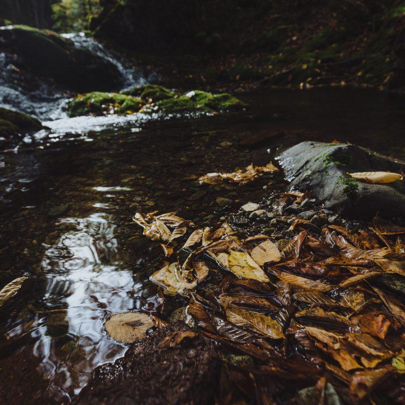New Brunswick Photography